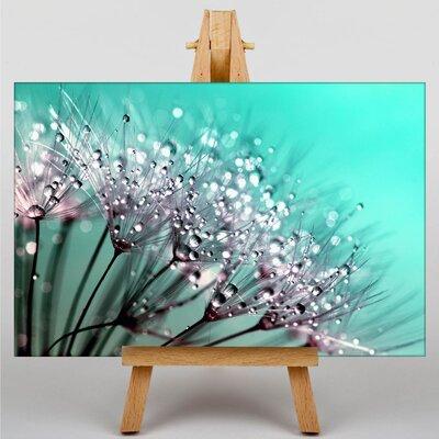 Big Box Art Dandelion Seeds Flower No.5 Photographic Print Wrapped on Canvas