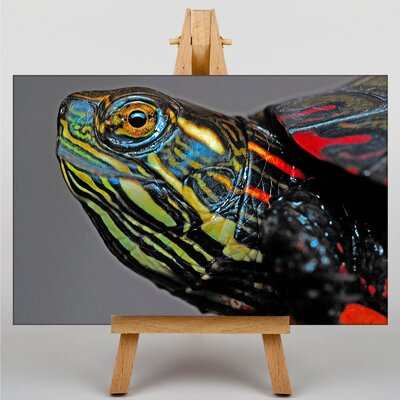 Big Box Art Painted Turtle Graphic Art Wrapped on Canvas