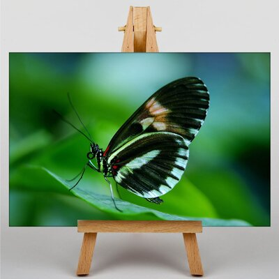 Big Box Art Papilio Butterfly Photographic Print Wrapped on Canvas