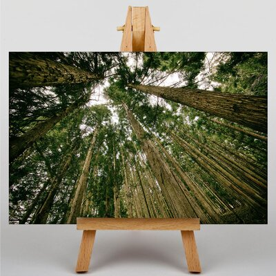 Big Box Art Woodland Forest Sky Photographic Print Wrapped on Canvas