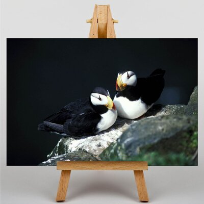 Big Box Art Puffins Photographic Print on Canvas