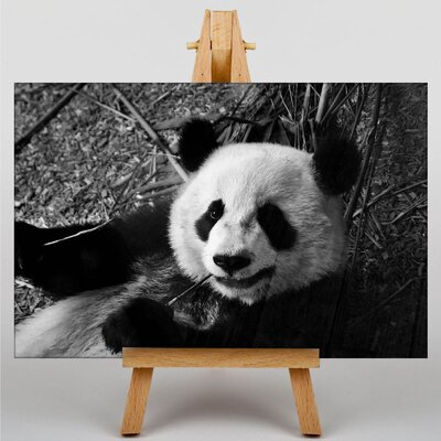Big Box Art Panda Photographic Print on Canvas