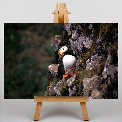 Big Box Art Puffin Photographic Print on Canvas