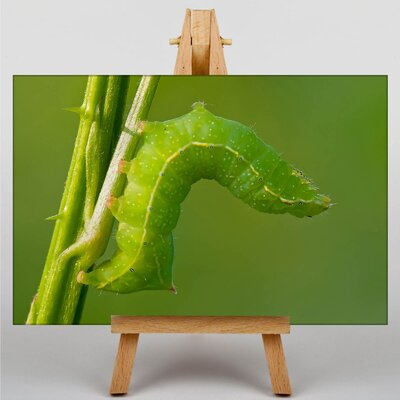Big Box Art Caterpillar Photographic Print Wrapped on Canvas