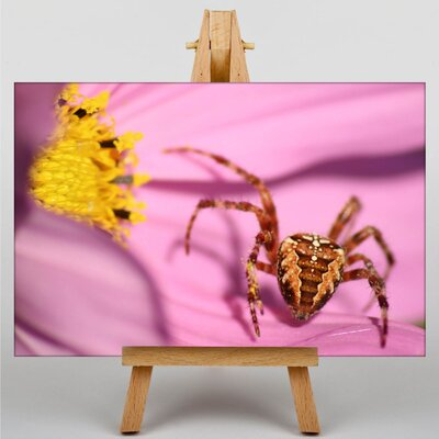 Big Box Art Spider on Flower Photographic Print on Canvas