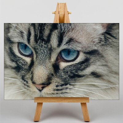 Big Box Art Cat Eyes No.3 Photographic Print on Canvas