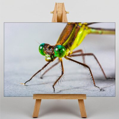 Big Box Art Dragonfly No.2 Photographic Print Wrapped on Canvas