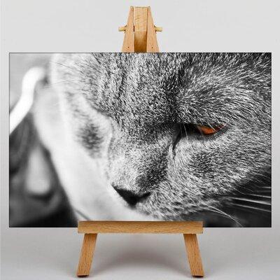 Big Box Art Cat No.5 Photographic Print on Canvas