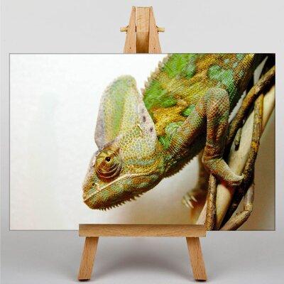 Big Box Art Chameleon No.2 Photographic Print Wrapped on Canvas