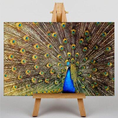 Big Box Art Peacock Bird No.4 Photographic Print on Canvas