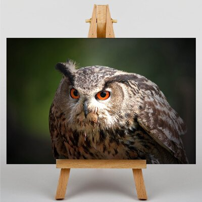 Big Box Art Owl No.4 Photographic Print on Canvas