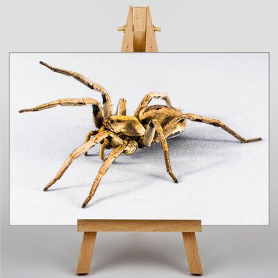 Big Box Art Spider No.5 Photographic Print on Canvas