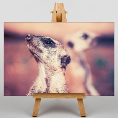 Big Box Art Meerkats Photographic Print on Canvas