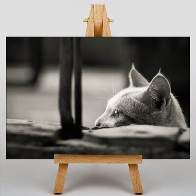 Big Box Art Peering Cat Photographic Print on Canvas