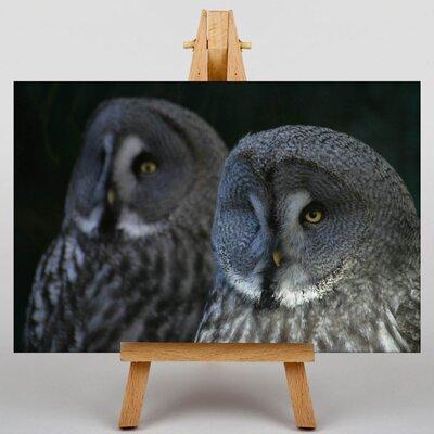 Big Box Art Dark Grey Owls Photographic Print on Canvas
