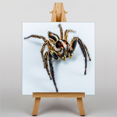 Big Box Art Jumping Spider No.1 Photographic Print on Canvas