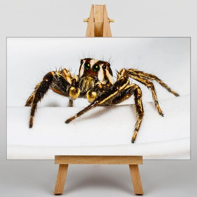 Big Box Art Jumping Spider No.4 Photographic Print on Canvas