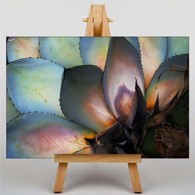 Big Box Art Cacti Cactus No.3 Photographic Print Wrapped on Canvas