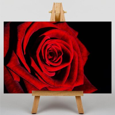 Big Box Art Rose Flower No.11 Photographic Print on Canvas