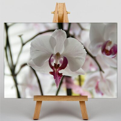 Big Box Art White Orchid Flower No.3 Photographic Print on Canvas