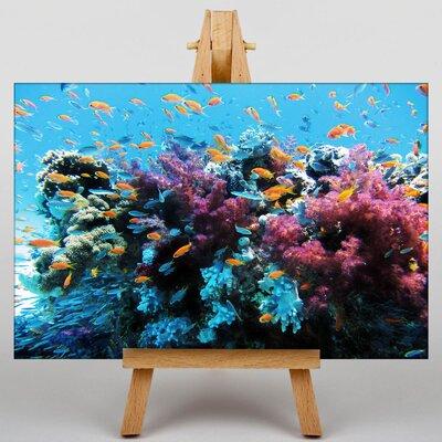 Big Box Art Coral Reef Fish Photographic Print on Canvas