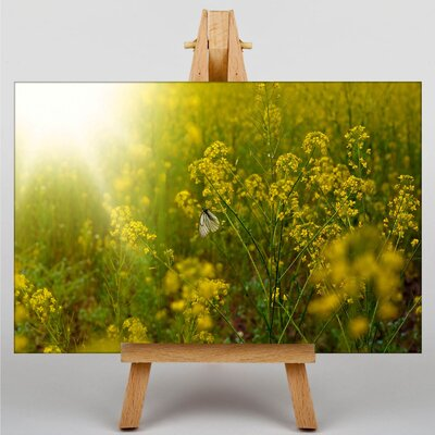 Big Box Art Sunlight over Meadow No.2 Photographic Print on Canvas