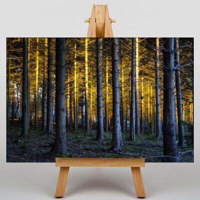 Big Box Art Enchanted Forest Photographic Print on Canvas