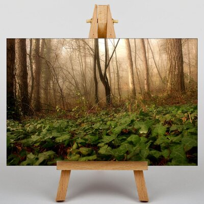 Big Box Art Forest Mist No.2 Photographic Print Wrapped on Canvas