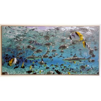 ERGO-PAUL Blacktip Sharks and Tropical Fish in Lagoon Framed Painting Print