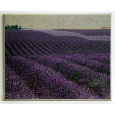 ERGO-PAUL Lavender on Canvas 1 Painting Print