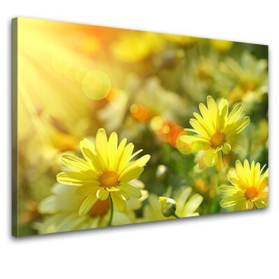 LanaKK Daisies Photographic Print on Canvas