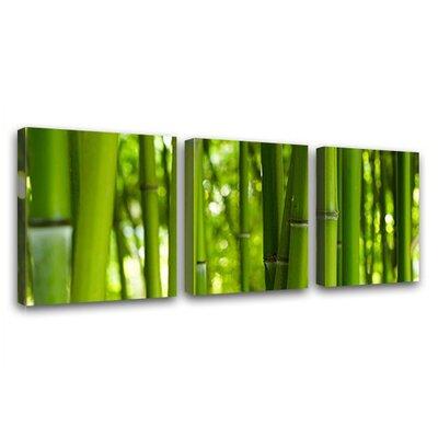 LanaKK Bamboo 3 Piece Photographic Print on Canvas Set