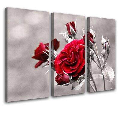LanaKK Rose 3 Piece Photographic Print on Canvas Set