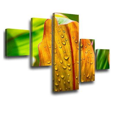 LanaKK Chlorophyll 5 Piece Photographic Print on Canvas Set