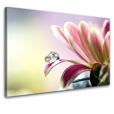 LanaKK Springtime Photographic Print on Canvas