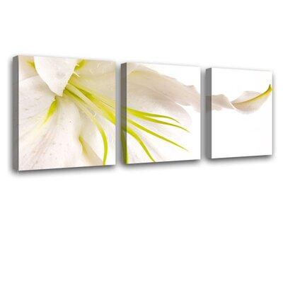 LanaKK Lily 3 Piece Photographic Print on Canvas Set