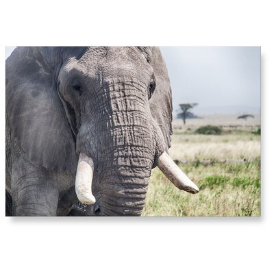 LanaKK Elefant Photographic Print