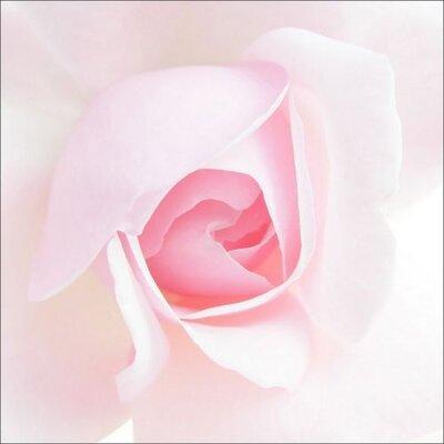 Dekoria Rose Photographic Print