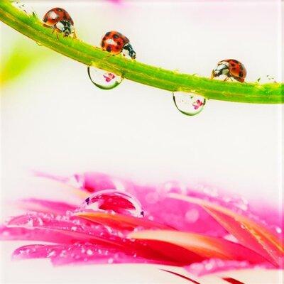 Dekoria Ladybirds Photographic Print
