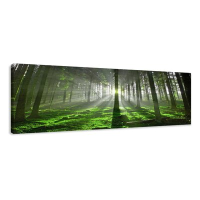 Urban Designs Forest Photographic Print Wrapped on Canvas