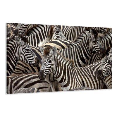 Urban Designs Zebra Photographic Print Wrapped on Canvas