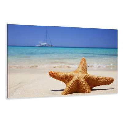 Urban Designs Starfish Photographic Print Wrapped on Canvas