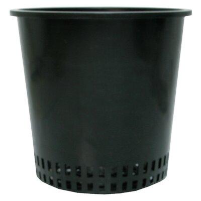 """Plastic Pot Planter Size: 6"""""""