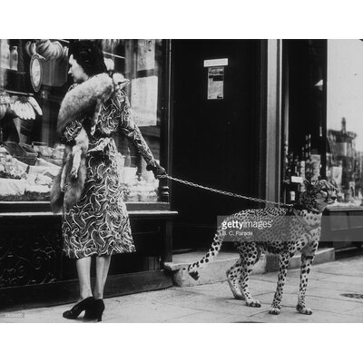 GettyImagesGallery Cheetah Who Shops by B. C. Parade Photographic Print