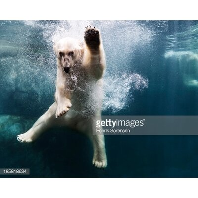 GettyImagesGallery Polarbear in Water by Henrik Sorensen Photographic Print