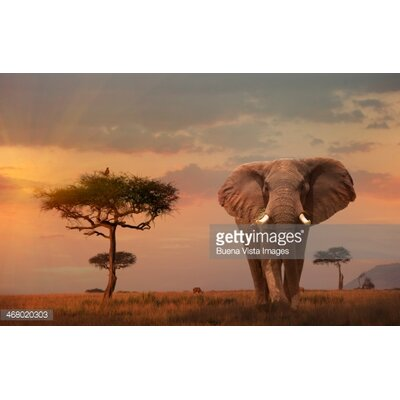 GettyImagesGallery Giant Male Elephant (Loxodonta Africana) by Buena Vista Images Photographic Print