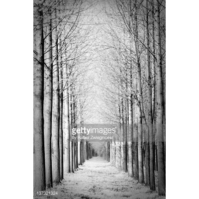 GettyImagesGallery Snowy Forest by Rafael Zwiegincew Photographic Print