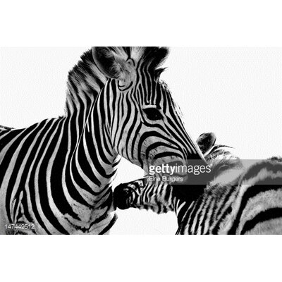 GettyImagesGallery Zebras by Elne Burgers Photographic Print