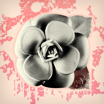Fluorescent Palace Petal Pusher Graphic Art on Canvas