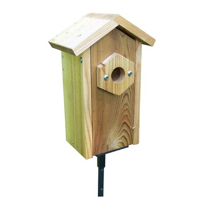 Window Viewing Nest Box Pedestal 14 in x 6.5 in x 8.5 in Birdhouse